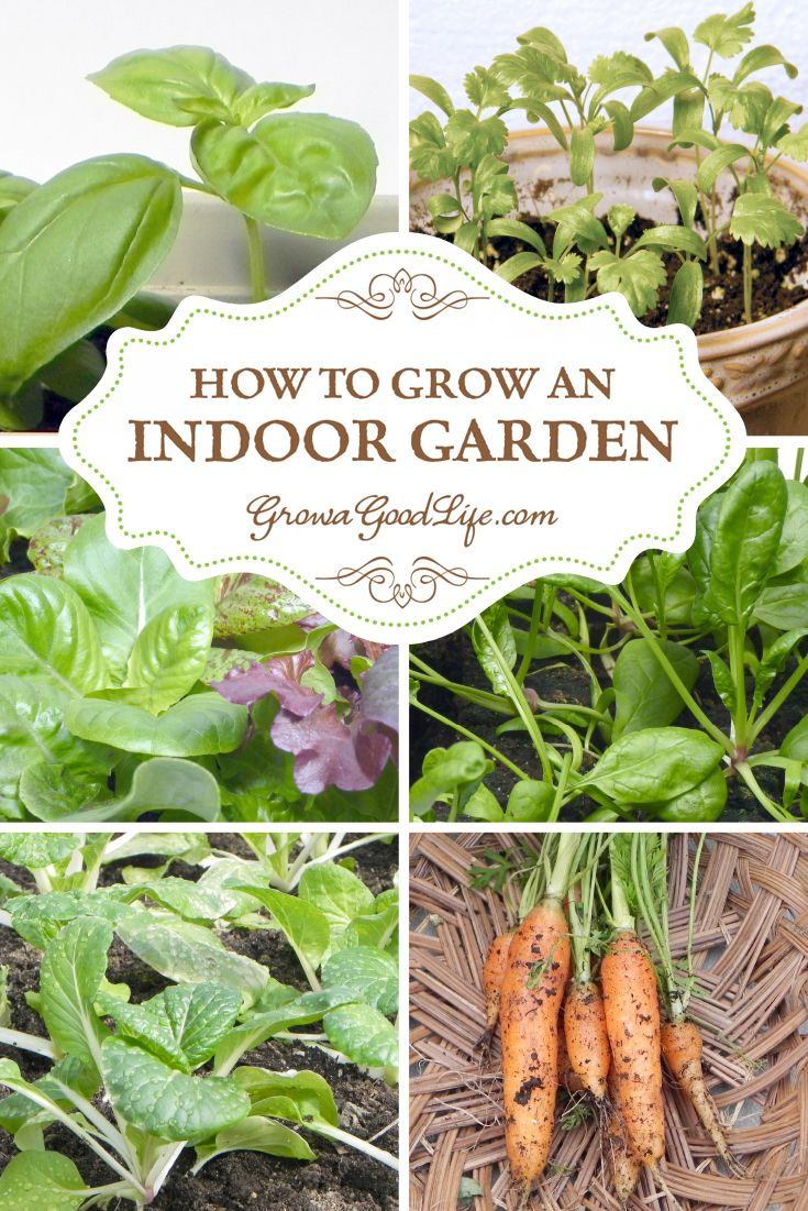 You can grow vegetables in your own indoor garden craving for Grow your own vegetable garden