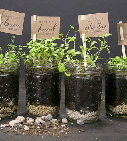 Do It Yourself Mason Jar Kitchen Herb Garden Package