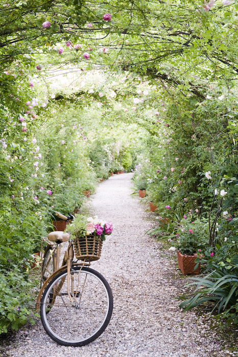 Ca' delle Rose Antique Rose Garden