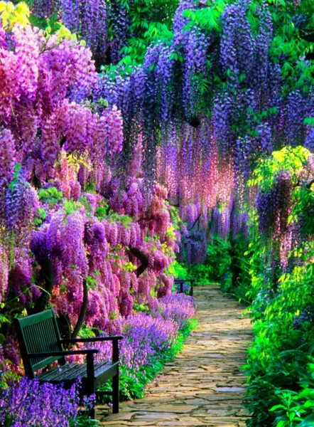 the Wisteria Tunnels